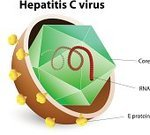 Hepatitis,Virus,hcv,Liver,Bacterium,Symbol,Healthcare And Medicine,Illness,Letter A,Biology,Diagram,People,Science,Envelope,Human Digestive System,Microscope,DNA,Protein,Immunology,hepatic,Hepatitis B,Micro Organism,Anatomy,Security,helical,Microbiology,Morphology,Vector,Cell,enveloped,Human RNA,Human Immune System,Inflammation,Problems,Hepatitis A,Polyhedron,Plan,Microbial