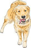 Dog,Standing,Sketch,Happiness,Cheerful,Animal,Smiling,Puppy,Tail,Labrador Retriever,Retriever,Pets,Pastel Colored,Power,Vector,Purebred Dog,Running,Close-up,Straw-colored,Large,Yellow