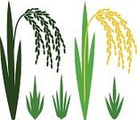 Rice - Cereal Plant,Rice - Food Staple,Symbol,Silhouette,Sign,Rice Paddy,Vector,Yellow,Harvesting,Asia,Plant,Grass,Set,Food,Crop,Design Element,Branch,Isolated,Ripe,Bush,Stem,Green Color,vegetarianism,Village,Asian Cuisine,Cereal Plant,Wholegrain,Agriculture,Japanese Culture