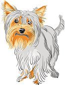 Yorkshire,Puppy,Animal,Red,Dog,Purebred Dog,Terrier,Vector,Ilustration,Small,Bizarre,Brown,Black Color,Humor,Fun,Three-color,Sketch,Cute,Long Hair,White,Spotted,Shaggy,Bangs,Gray Hair