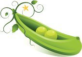 Green Pea,Like Two Peas In A Pod,Plant Pod,Vine,Vegetable,Vector,Computer Graphic,Sayings,Flower,Ilustration,Leaf,Clip Art,Nature,Plants,Illustrations And Vector Art,Ideas,Concepts,Concepts And Ideas