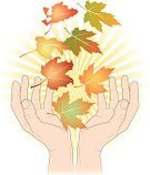 Hands Cupped,Autumn,Plant,Illustrations And Vector Art,Sunlight,Actions,Tree,Nature,Nature,Beauty In Nature,Concepts,Ideas,Leaf