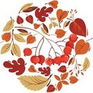 Rowanberry,Nature,October,Maple Tree,Leaf,Isolated,Orange Color,Park - Man Made Space,Vector,Yellow,Textured,September,Season,Ilustration,Bush,Four Seasons,Rowan Tree,Set,Tree,Bright,Autumn,Botany,Multi Colored,Color Image,Collection,Brown,Plant