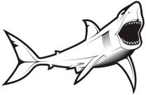 Shark,Fish,Sign,Vector,Animal Mouth,Animal Teeth,Underwater,Death,Fear,White,Single Line,Sea,Art,In A Row,Terrified,Discovery,Illustrations And Vector Art,Plastic,predaor