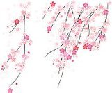 Cherry Blossom,Flower,Blossom,Pink Color,Vector,Branch,Springtime,Black Color,White,Ilustration,Growth,Ornate,Beauty,Petal,Plant,Nature,Design Element,Isolated,Isolated On White,Vector Florals,Flowers,Nature,Illustrations And Vector Art