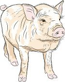 Cartoon,Mascot,Animal,Cute,Sketch,Vector,Pink Color,Animals In The Wild,Farm,Humor,Fun,Portrait,Pot-bellied Pig,Pig,Piglet,Boar Meat,Close-up