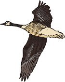 Goose,Canada Goose,Engraved Image,Vector,Flying,Bird,Autumn,Four Seasons,Spread Wings,April,Winter,October,September,November,Animals And Pets,Nature,March,December,Illustrations And Vector Art,Backgrounds,Birds,North,Springtime,north woods,February