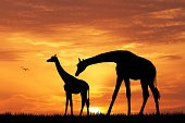 Safari Animals,Sunset,Animals In The Wild,Africa,Tourism,Small,Nature,Travel,Giraffe,Indigenous Culture,Animal,Ilustration,African Culture,Animal Themes,Travel Destinations