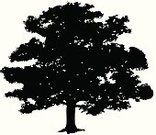 Oak Tree,Vector,Silhouette,Ilustration,Tree