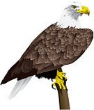 Eagle - Bird,Bald Eagle,Vector,Perching,American Culture,Feather,Bird of Prey,Talon,Branch,Bird,Ilustration,Isolated-Background Objects,Birds,Isolated Objects,Animals And Pets,Isolated On White,Illustrations And Vector Art
