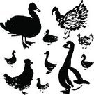 Turkey - Bird,Sparse,Vector,Duck,Silhouette,Sea Duck,Black Color,Livestock,Cartoon,Food,Housework,Symbol,Domestic Life,Ilustration,Side View,Group of Objects,Rooster,Goose,Set,Ink,hand drawn,Livestock Farming,template,Drawing - Art Product,Poultry,Chicken - Bird,Computer Graphic,Isolated,Clip Art,Meat,Abstract,two-legged,Beak,Collection,Animal Breeding,Wing,Hen,Farm,Bird,Cockerel,Flock Of Birds,Domestic Animals,Feather,Group Of Animals,Agriculture