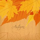 Red,Ornate,Colors,Backgrounds,Autumn