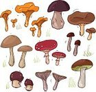 Forest,Food,Fungus,Ilustration,Vector,Edible Mushroom,Brown,Ingredient,Mushroom,Nature,Red,Group of Objects,Computer Graphic,Cepe,Vegetable,Outline,Drawing - Art Product,Poisonous Organism,Grass,Collection,Chanterelle,Freshness,Autumn,Cartoon,Organic,Pattern,Art,Summer,Healthy Eating,Vegetarian Food,Symbol,Set,Meal,Raw Food,Eat,Orange Color,White Mushroom,Toadstool,Style,Colors,Russula Mushroom,Plant,Season