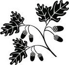 Oak,Acorn,Leaf,Branch,Tree,Vector,Symbol,Black Color,Autumn,Seed,Twig,Woodland,Decoration,Design,Computer Graphic,Ornate,Ilustration,Botany,Plant,Creativity,filigree,Floral Pattern,Paintings,Shape,Part Of,Nature,Fantasy,Illustrations And Vector Art,Elegance,Style,Beauty In Nature,Art,Design Element,Nature,Beauty,Curve