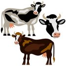 Cow,Vector,Isolated,Exoticism,Set,Design Element,Symbol,Ilustration,Livestock,Animal,Wildlife,Abstract