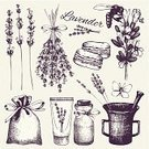 Decor,Beauty Product,Romance,Bouquet,Jar,Bag,Sweet Food,Nature,Botany,Cream,Design,Drawing - Art Product,Pencil,Plant,Animal Markings,France,Drawing - Activity,White Color,Pattern,Old-fashioned,Canvas,Bee,Butterfly - Insect,Spice,Herb,Flower,Seed,Bud,Lavender,Gardening,Lilac,Cut Out,Blossom,Illustration,Beauty In Nature,Floral Pattern,Vector,Collection,Macaroon,Bunch of Flowers,White Background,Lavender Colored,Mag,Design Element