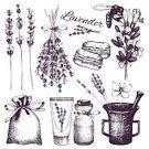 Decor,Beauty Product,Romance,Bouquet,Jar,Bag,Sweet Food,Nature,Botany,Cream,Design,Drawing - Art Product,Pencil,Plant,Animal Markings,France,Drawing - Activity,White Color,Pattern,Old-fashioned,Canvas,Bee,Butterfly - Insect,Spice,Herb,Flower,Seed,Bud,Summer,Lavender,Gardening,Lilac,Cut Out,Blossom,Illustration,Beauty In Nature,Floral Pattern,Vector,Collection,Macaroon,Bunch of Flowers,White Background,Lavender Colored,Mag,Design Element