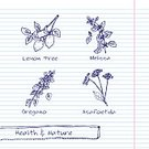 Branch,handdrawn,Doodle,Leaf,Symbol,Sketch Pad,Ayurveda,Merchandise,Environment,Aromatherapy,Sign,Organic,Collection,Label,Blue,Vector,Spice,Backgrounds,Beauty Product,Asafoetida,Oregano,Nature,Ilustration,Melissa - Texas,Lemon,Tree