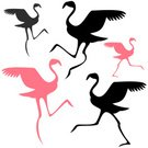 Exoticism,Set,Isolated,Design Element,Silhouette,Abstract,Ilustration,Flamingo,Vector,Animal,Wildlife,Bird