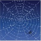 Spider Web,Spider,Dew,Halloween,Drop,Rain,Spinning,Water,Pattern,Backgrounds,Trap,Condensation,webbing,Arachnid,Dawn,Nature Backgrounds,Vector Backgrounds,Insects,Animals And Pets,Nature,Illustrations And Vector Art,Nature