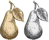 Pear,Engraved Image,Food,Fruit,Sketch,Drawing - Art Product,Watercolor Painting,Pencil Drawing,Black And White,Clip Art,Ilustration,Grayscale,Vector,Illustrations And Vector Art,Fruits And Vegetables,Food And Drink,Isolated Objects,hand drawn,Pen And Ink,Sepia Toned,Isolated