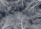 Forest,Dark,Winter,Sketch,Ilustration,Branch,Vector,Night,Tree,Woodland,Star - Space,Tree Canopy