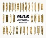 Cereal Plant,Wheat,Symbol,Seed,Wreath,Laurel Wreath,Barley,Bread,Breakfast Cereal,Sparse,Package,wheat ear,Healthy Eating,Plant,Backgrounds,Gold Colored,Elegance,Growth,Organic,Banner,Rubber Stamp,Shield,Design Element,Agriculture,Sign,Farm,Stem,Crop,Freshness,Placard,Silhouette,Decoration,Isolated,Healthy Lifestyle,Computer Graphic,Badge,heraldic,Part Of,Set,Simplicity,Rye,Shape,Design,Coat Of Arms,New,Seal - Stamp,Nature,Branding,Insignia,Collection