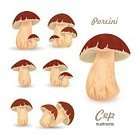 Porcini Mushroom,Season,Vegetarian Food,Single Object,Cap,Autumn,boletus,Freshness,Cepe,template,Vitamin Pill,Eating,Brown,Organic,Backgrounds,Image,Vector,Vegetable,Ripe,Spore,Food,Ilustration,Forest,Fungus,Collection,Nature,Toadstool