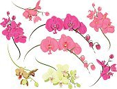 Plant,Orchid,Pattern,Design,Affectionate,Single Object,Color Image,White,Blowing,Green Color,Tropical Climate,Wealth,Springtime,Simplicity,Exoticism,Pastel Colored,Vector,Computer Graphic,Blossoming,Nature,Purity,Ilustration,Wedding,Design Element,Bud,Blooming,Curled Up,Inflorescence,Bouquet,Pink Color,Red,Single Flower,Swirl,Vibrant Color,Bright,Yellow,Petal,Beauty In Nature,Magenta,Elegance,Baroque Style,Summer,Blossom,Old-fashioned,Drawing - Art Product,Perfection,Flower Head,Flower