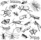 Sketch Pad,Bee,Dragonfly,Sketch,Spider,Drawing - Art Product,Grasshopper,Symbol,Old-fashioned,Monochrome,Straight,Outline,Larva,Snail,Cruel,Stinging,Painted Image,Black Color,Insect,Butterfly - Insect,Beetle,Beautiful,hand drawn,Animal,Set,Wildlife,Danger,Summer,Moth,Toxic Substance,Nature,Horror,Caterpillar,Sign,Slug,Millipede,Wasp,Individuality,Crawling,Collection,Fly,Group of Objects,Single Line,Ink,Centipede