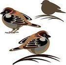 Set,Exoticism,Isolated,Design Element,Abstract,Ilustration,Sparrow,Vector,Animal,Wildlife,Bird