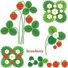 Illustration Technique,Exoticism,Symbol,Set,Design Element,Vector,Red,Berry Fruit,Strawberry,vegetarianism,Cooking,Abstract