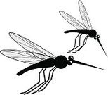 Mosquito,Insect,Flying,Vector,Ilustration,Cartoon,Cute,Irritation,Wing,Humor,Animals And Pets,Illustrations And Vector Art,Insects,Isolated On White,Black Color,Pest,Two Animals,Copy Space,Square