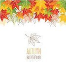 Nature,Leaf,Red,Season,Vector,Ilustration,Ornate,Autumn,Backgrounds,Botany,Multi Colored,Yellow