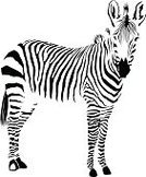 Zebra,Animal Head,Nature,Horse,Outline,White,Isolated,Mammal,Vector,Single Object,Safari Animals,Silhouette,Backgrounds,Animal Skin,Stallion,Black Color,Animals In The Wild,Zoo,Animal,Wildlife,Animal Nose,Pattern,Hoof,Shape,Hide,Abstract,Ilustration,Striped,Africa