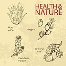 Collection,essential,Argan Tree,Ayurveda,Ilustration,Orange Tree,Aloe,Spice,Alternative Medicine,Vector,Nature,Rhodiola Rosea,handdrawn,Brown,Beauty Product,Label,Nutritional Supplement,Relaxation,Merchandise,Organic,Sign,Backgrounds,Symbol