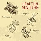 Aromatherapy Oil,Cedar Tree,Label,Symbol,Nature,handdrawn,Ilustration,Tangerine,Collection,Vector,juniper berry,Organic,Ayurveda,Merchandise,Spice,Nutritional Supplement,Handwriting,Branch,Alternative Medicine,Beauty Product,Backgrounds,Relaxation,Brown,Sign