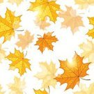 Autumn,Falling,Leaf,Backgrounds,Vegetable Garden,Gold Colored,Spotted,Yellow,Maple,Maple Tree,Botany,White,October,Bright,Sunny,Seamless,Pattern,Multi Colored,foliagé,Patch,Season,Light - Natural Phenomenon,Air,Day,Red,Nature,Orange Color,September,fall down,Vibrant Color,Lush Foliage,Vector,Plant,Sun,Japanese Fall Foliage,Sunlight,Bush