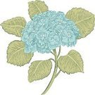 White,Hydrangea,Beauty In Nature,Drawing - Art Product,Flower Head,on white background,Cut Flowers,Paintings,Isolated On White,Petal,Pattern,Art,Springtime,Single Object,Freshness,Formal Garden,Blue,Vector,Fragility,Elegance,Summer,Botany,Computer Graphic,Design,Leaf,Plant,Blossom,Blossoming,Nature,Single Flower,Flower,Ilustration