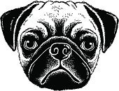 Sketch,Drawing - Art Product,Pencil Drawing,Fine Art Portrait,Portrait,Ilustration,Isolated,Mammal,Purebred Dog,Isolated On White,Dog,Etching,Anthropomorphic Face,Overweight,Black And White,pooch,Close-up,Small,Pets,Furious,Mask,Animal,Love,Animal Saliva,Puppy,Sadness,Depression - Sadness,Black Color,Wrinkled,Mixed-Breed Dog,Friendship,Frowning,Pen And Ink,Canine,Humor,Cute,Staring,Begging,Tattoo,Fawn,Pug