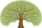 Family Tree,Tree,Oak,Oak Tree,Branch,Tree Trunk,Growth,Vector,Leaf,Plant,Deciduous Tree,Green Color,Nature,Environment