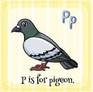 Pigeon,linguistic,phonic,Clip Art,Letter P,Bird,Flying,Animal,Beak,Computer Graphic,Alphabet,Education,Lifestyles,Vector,Single Word,Spelling,Face Card,Flash Card,Learning,Ilustration