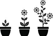 Flower Pot,Growth,Botany,Horticulture,Isolated,Ilustration,Black Color,Vector,Plant,Symbol,Nature,Set,Group of Objects,White Background,Houseplant,Single Flower,Flower,Leaf