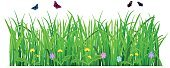 Backgrounds,Blade of Grass,Butterfly - Insect,Field,Meadow,Plant,Flower,Summer,Lawn,Rural Scene,Botany,Freshness,Season,White,Leaf,Ilustration,Dandelion,Herb,Formal Garden,Environment,Lush Foliage,Beauty,Design,Horizontal,Vector,Isolated,Springtime,Green Color,Grass,Nature