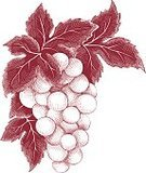 Wine,Grape,Vine,Old,Computer Graphic,Vegetable,Old-fashioned,Autumn,Bunch,Alcohol,Tendril,Retro Revival,Plate,Berry Fruit,Backgrounds,Etching,Engraved Image,Swirl,Plant,Botany,Ingredient,Crop,Decoration,Ilustration,Leaf,Vector,Fruit,Food,Drink,Sweet Food,Painted Image,Floral Pattern,Ornate,Design,Nature,Ripe,Agriculture,Freshness,Vertical