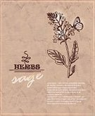Nature,Collection,Dry,Factory,Beige,Messy,Brown,herbarium,Medicine,Backgrounds,Ilustration,Plant,floristry,Doodle,Herbal Medicine,Vector