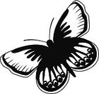 Black Color,North America,Black And White,Nature,Wildlife,Karner Blue Butterfly,Flower Bed,Karner Blue,Insect,flying insect,Gardening,Butterfly - Insect