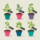 Basil,Sage,Herb,Rosemary,Flower Pot,Formal Garden,Identity,Food,Plant,Domestic Kitchen,Human Hand,Green Color,Wooden Post,Healthy Eating,Healthy Lifestyle,Cute,Spice,Multi Colored,Vector,Ilustration,Parsley,Dill,Mint Leaf - Culinary