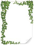 Ivy,Frame,Vector,Creeper Plant,Crowded,Green Color,Grape,Hanging,Cultivated,Leaf,White,Blank,Backgrounds,Deterioration,Lush Foliage,Decoration,Shadow,Document,Sheet,Paper,Nature,Liana,Ilustration,Twig,Plant,Computer Graphic
