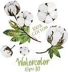 Botany,Vector,Leaf,Textile,Summer,Blossom,Plant,Creativity,Part Of,Environment,Springtime,Twig,Old-fashioned,Art,Elegance,Multi Colored,White,Beauty In Nature,Set,Art Product,Branch,Design Element,Cotton Plant,Cotton,Healthy Lifestyle,Healthcare And Medicine,Cute,Flower Head,Computer Graphic,Decoration,Softness,Watercolor Painting,Romance,Bouquet,Wedding,Paintings,Nature,Flower,Painted Image,Ilustration